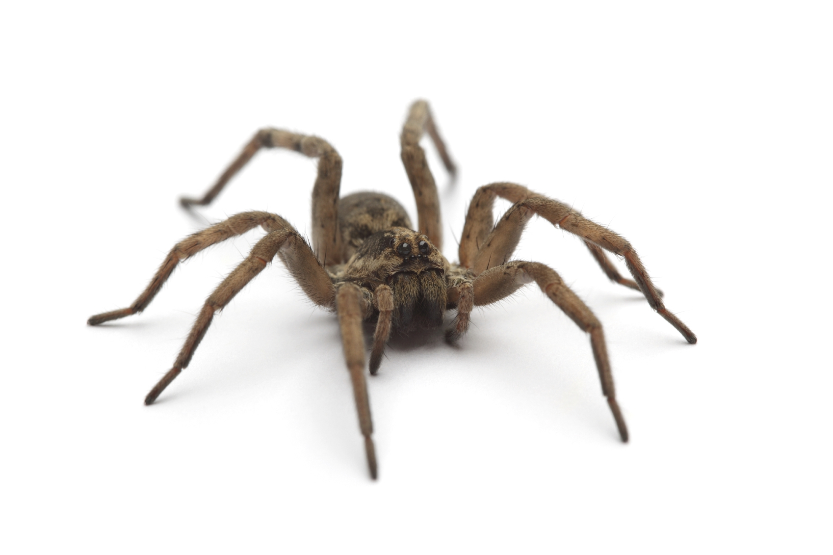 fear of spiders This article originally appeared on vice australia you might have suspected this for a while, but your dumb, crippling fear of snakes and spiders isn't your fault it's instinctual scientists now have conclusive evidence to show humans have evolved with a hardwired fear of snakes and spiders this.